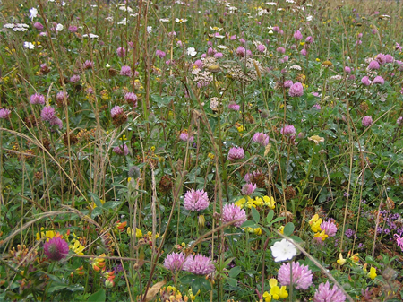 Flora 11 Seed Mix Bauder