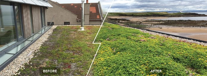 Before and after green roof maintenance