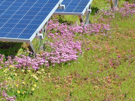 Flora 3 Seed Mix Bauder
